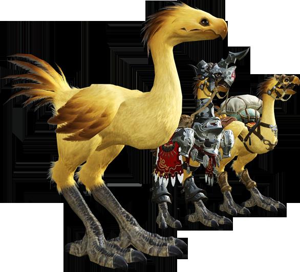 最终幻想14学识:陆行鸟