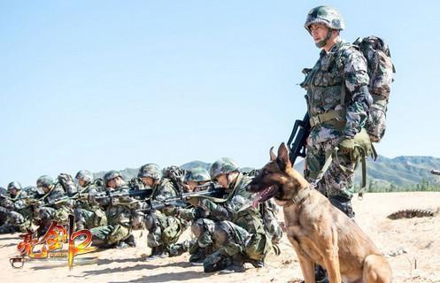 军犬奇兵_亮剑2 《亮剑2》之神犬奇兵 十二兽类性格完虐日军  威猛军犬登陆抗日