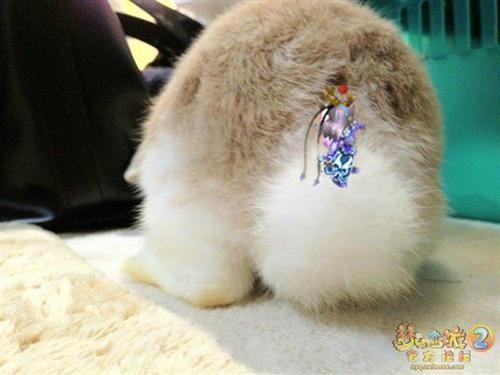 萌宠兔图片大全可爱