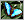 阿波罗绢蝶