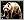 科穆多巨蜥