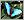 蓝斑黑蛱蝶
